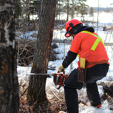 Chainsaw Safety - WTA Woodland Trainers Association